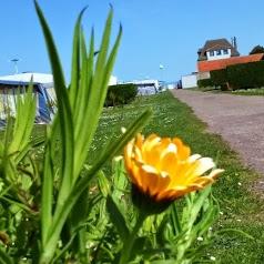 Camping Normandie sur Mer Oasis**