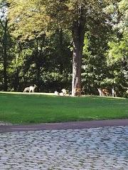 Société du Parc des Forgets