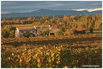 Cyprès des Vignes