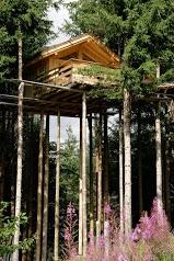 Cabanes dans les Arbres: Les Ecotagnes