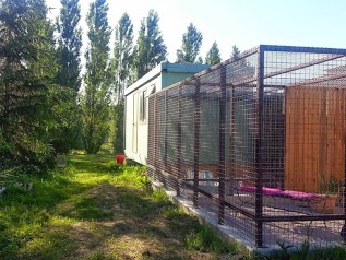 O Chat Roi, pension chat Toulouse