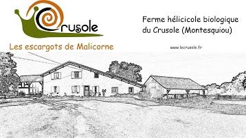 Crusoulé