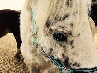 Equestrian Farm Hippocamp'