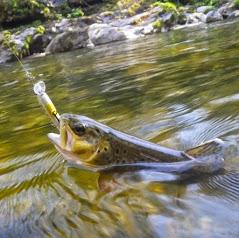 Pêchez en Pays Gentiane