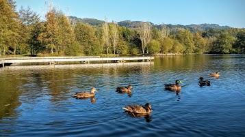 La Catiche du Lac d'Aubusson d'Auvergne