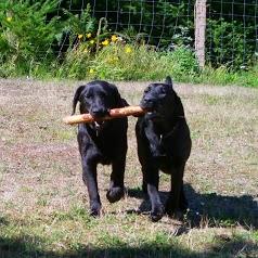 Pension canine rendez-vous des copains