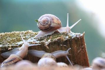 Les escargots du petit bois